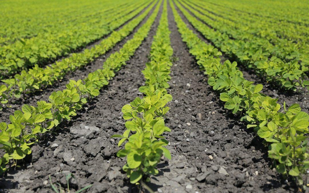 növénytermesztési termelésirányító